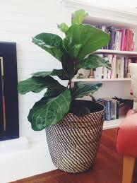 5 of my favorite indoor houseplants with love