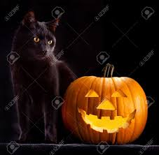 cat halloween night cat images u0026 stock pictures royalty free night cat photos