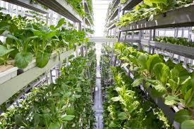 Vertical Garden Vegetables by Vertical Farming Market Growth Garden Culture Magazine
