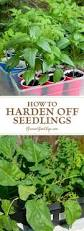 283 best images about vegetable garden tips and tricks on