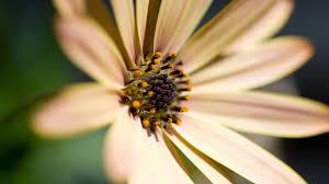வால்பேப்பர்கள் ( flowers wallpapers ) 01 - Page 19 Images?q=tbn:ANd9GcQNEqiHSiCUtNkbQG3wCzY_NQLSsMRu9h9IZb8KWbwmYjX7j3e0