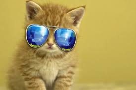 cute backgrounds for computer cute animal pics wallpapers 56 wallpapers u2013 hd wallpapers