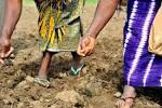 farmlandgrab.org | 7 300 acquéreurs fonciers pour toutes les ...