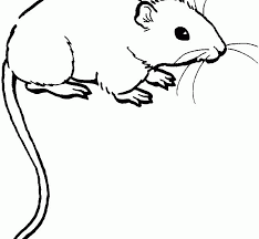 download mouse coloring pages bestcameronhighlandsapartment