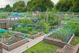 companion vegetable garden layout vegetable garden plans for healthy life neubertweb com