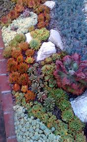 Rock Garden Plants Uk best 20 rock garden borders ideas on pinterest landscaping