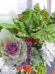 top 10 winter plants to brighten up your balcony top inspired