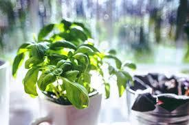 die natur ins haus holen 6 ideen mit holz und pflanzen