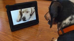 بینایی سگ ها