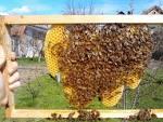 vlaga u kosnici - Stranica 3 - Zajednički pčelarski forum ... - Downloadable