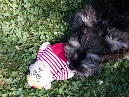 buy a affenpinscher barkbox july 2017 subscription box review coupon hello