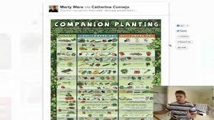 companion vegetable garden layout companion planting list guide youtube