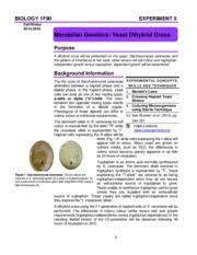 Pages Experiment   Mendelian Genetics Yeast Dihybrid Cross       Course Hero