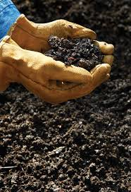 Manure For Vegetable Garden by 35 Best Garden Soil Images On Pinterest Garden Soil Garden
