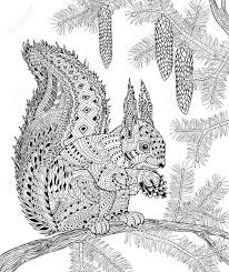 the squirrel for anti stress coloring page for art therapy