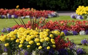 pretty flower garden brilliant garden flowers flowers f to image