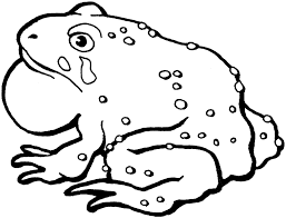 tadpole coloring page frog color by numbers cute frog coloring books for drawing kids