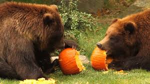 halloween events for kids in new york 2017 axs