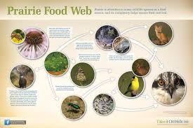 What Is Flower Food by Seeds And Snakes Flower And Fox Inside The Prairie Food Web