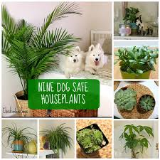 pet friendly plants 4759