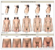 nude photos of female stages of puberty|Medical records of the human growth stages - female - male
