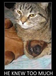 images about Funny Cats   on Pinterest   Funny cats  Funny     Pinterest