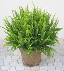 Combattere l'inquinamento domestico con le piante Images?q=tbn:ANd9GcQXxj8o4lWMroP6rkKJS5zCWwgANDpm23WF-8Rb4Zq1IGCPDZmneg