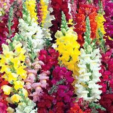 الزهور ونباتات الزينة, Images?q=tbn:ANd9GcQY-vds5nuy-pzbRKp9LAq4Z5B_Yz_mL5yeWs_yeQJLHsVW25Yf