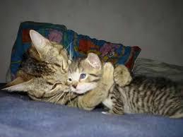 photo of Cute Kitten hug