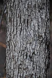 White Oak Bark Mt Tom Cabin Wondermyway