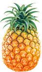 Pronuncia di Ananas