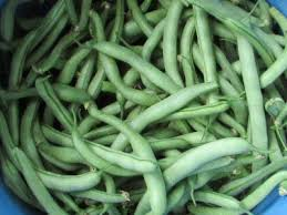 Acres  amp  A Dream  Green Beans    Beds  Same Variety  Big Difference
