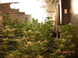 fluorescent lights fluorescent light grow fluorescent grow light
