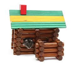Bán chuột hamster thuần chủng 100, màu sắc đẹp, thức ăn, vật dụng, đồ dùng, phụ kiện nuôi hamter