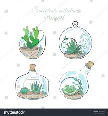 Decorative Glass Vases Set Four Floral Compositions Succulents Cactus Stock Vector