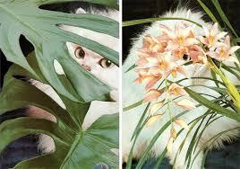 stephen-eichhorn-leaves-orchid-2010-1354203103_org.jpg - stephen-eichhorn-leaves-orchid-2010-1354203103_org