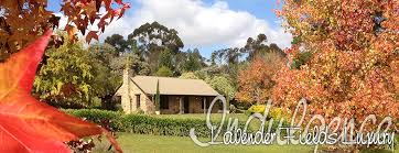 Luxury Accommodation Adelaide Hills   Lavender Fields Luxury