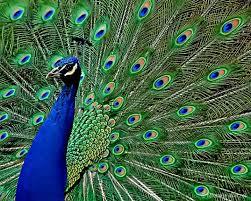 صور حيوانات جميييله  Images?q=tbn:ANd9GcQd8tszCl2M1-XBrB0qfZ-nY9hmz1YPzfiWMeNxAcRJSv1mLnUBSw