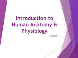 Anatomy And Physiology Chapter 1 Review Answers Introduction To Human Anatomy And Physiology Chapter 1 Ppt Video