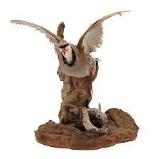 taxidermy bird chukar partridge in flight chairish