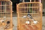 Tiệm <b>chim cảnh</b> 15 Đồng Đen và 56/10 Hoàng Sa. Quận Tân Bình