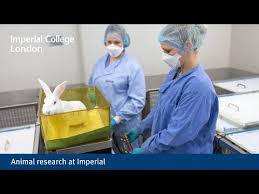 MSc in Mathematics and Finance   Imperial College London