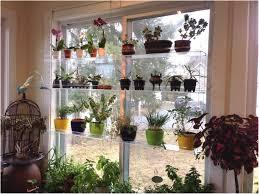 Kitchen Shelf Decorating Ideas Plant Stand Ideas Inside Shelf Window Designrulz 3 Kitchen Plant