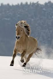 Udomi jednog od konja! - Page 6 Images?q=tbn:ANd9GcQgWZEy2lEJcjxrlt7OGc_ggXLYIquzWKweMjWhB5p1ikTatzme
