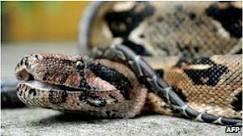 BBC Brasil - Notícias - Homem é detido com mala cheia de cobras ...