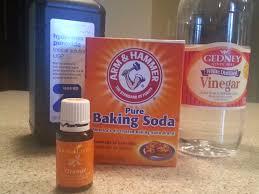 How To Get Rid Of Kitchen Sink Odor Best 25 Cat Urine Ideas On Pinterest Pet Urine Cleaner