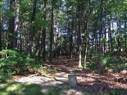 Backyard Golf Hole by I Created A Disc Golf Hole In My Backyard Woods Album On Imgur
