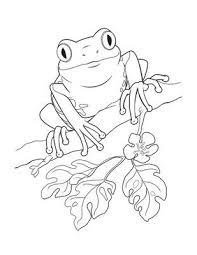 tadpole coloring page 25 best frog coloring pages ideas on pinterest frog crafts