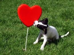 Segundo estudo, o coração do cachorro bate em sincronia com o do ...