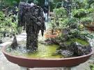 สวนถาด เขาตะปู, สวนถาด,ขายสวนถาด,จำหน่ายสวนถาด,จัดสวนถาด,สวนถาด